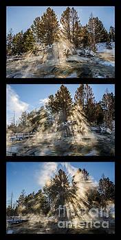 Awestruck Triptych by Sue Smith