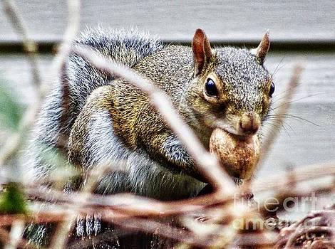Awww Nuts by Paul Wilford
