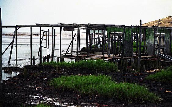 Muyiwa OSIFUYE - Ayetoro Wetland 2