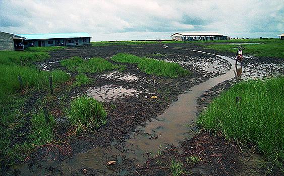 Muyiwa OSIFUYE - Ayetoro Wetland