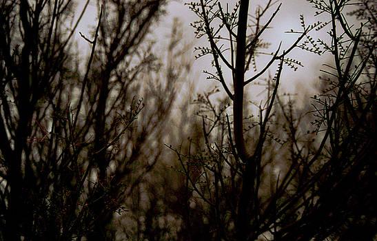 AZ Twilight by Ansate Jones