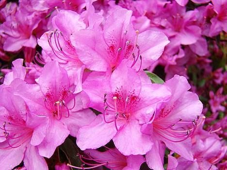 Baslee Troutman - Azalea Floral Garden Fine Art Photography Baslee Troutman