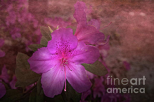 Azalea by Judy Hall-Folde
