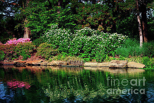 Azalea Reflection at Honor Heights Park by Tamyra Ayles