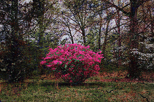 Warren Sarle - Azalea Transformed