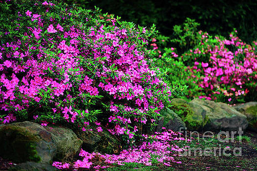 Azalea Waterfall at the Azalea Festival by Tamyra Ayles