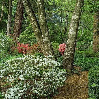 Azalea Woodland by Adam Gibbs