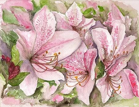 Azaleas by Bev Veals