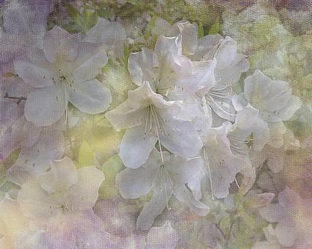 Azaleas in the Spring by TN Fairey