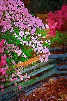 DONNA BENTLEY - Azaleas over the Fence