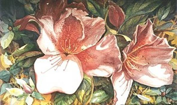 Azaleas by Sherry McClendon