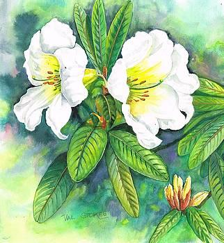 Azaleas by Val Stokes