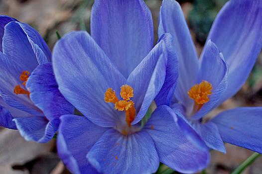 Azul by Scott Shisler