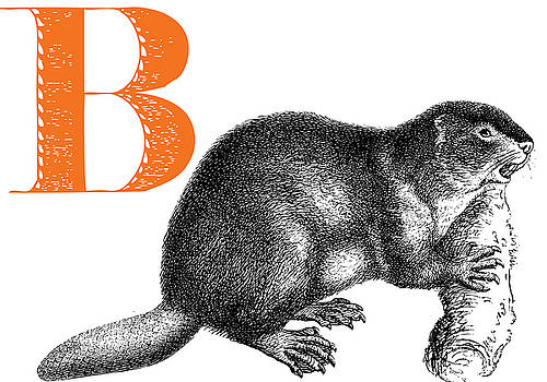 B Beaver by Thomas Paul