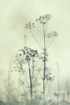 Wild flowers 3 by Priska Wettstein