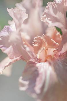 Baboon Bottom. The Beauty of Irises by Jenny Rainbow