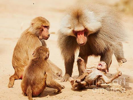 Nick  Biemans - Baboon family having fun in the desert
