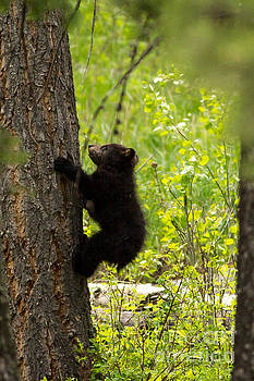 Baby Bear by Natural Focal Point Photography