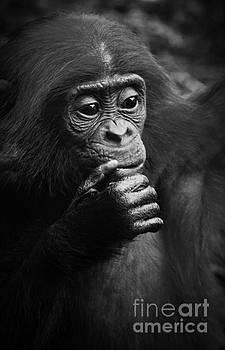 Heiko Koehrer-Wagner - Baby Bonobo