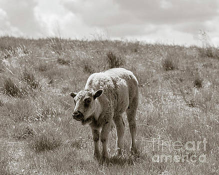 Baby buffalo in field with sky by Rebecca Margraf
