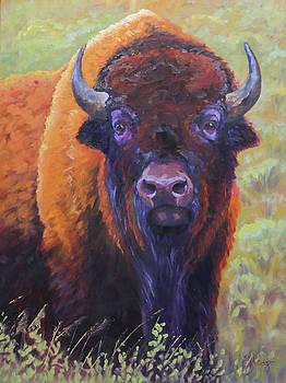 Baby Buffalo by Katy Widger