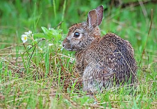Baby Bunny by Nina Stavlund
