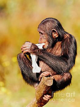 Nick  Biemans - Baby chimp in a tree