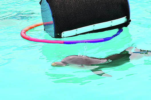 Baby Dolphin by Peter  McIntosh