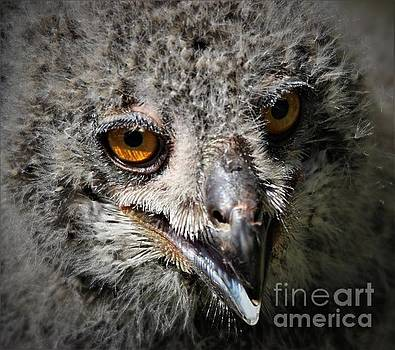 Baby Eagle Owl by Paulette Thomas