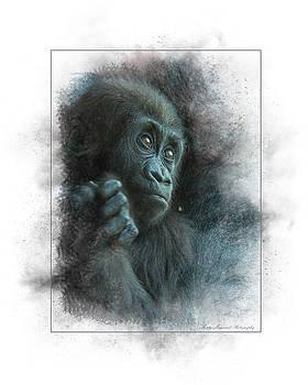 Baby Gorilla by Marty Maynard