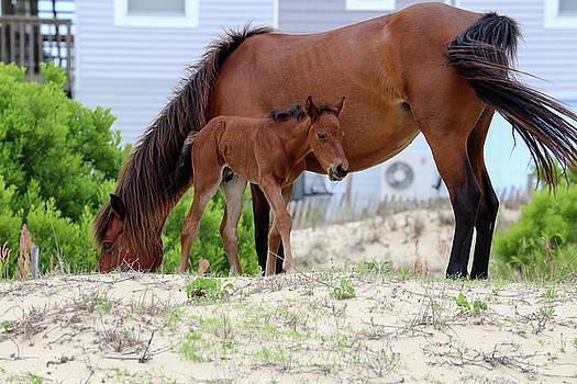 Baby Horse by David Stasiak