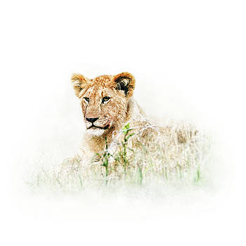 Baby Lion in Africa Isolated on White by Susan Schmitz