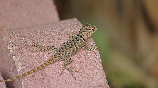 Baby Lizard  by Deanne Chapman