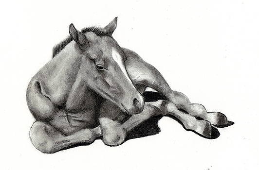 Joyce Geleynse - Baby Long Legs