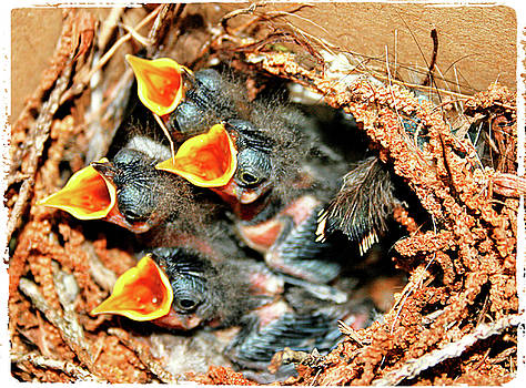 Baby Mockingbirds by Kori Creswell