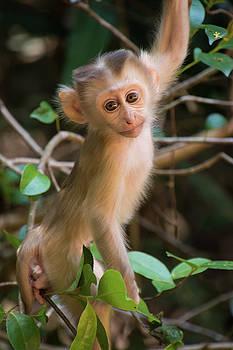 Baby Monkey climbing Tree by Maximilian Wollrab