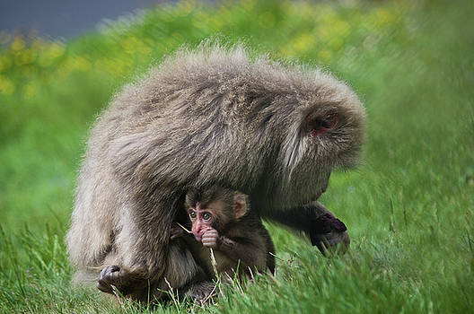 Baby Monkey by Jacqi Elmslie