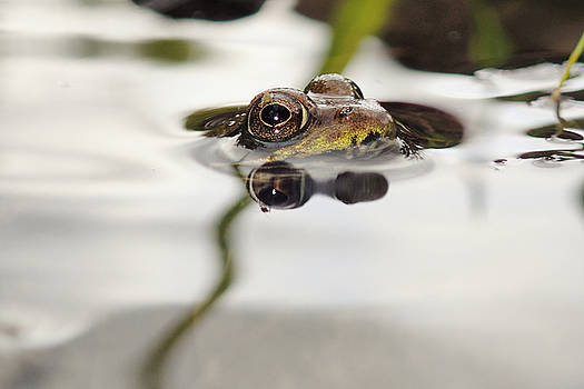 Baby of the Green Frog by Asbed Iskedjian