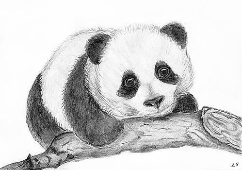 Baby panda by Sergey Lukashin