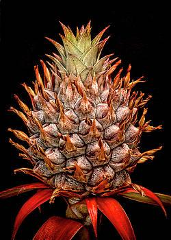 Heather Applegate - Baby Pineapple