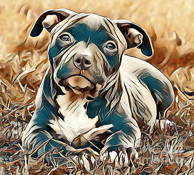 John Malone - Baby Pitbull Dog Portrait