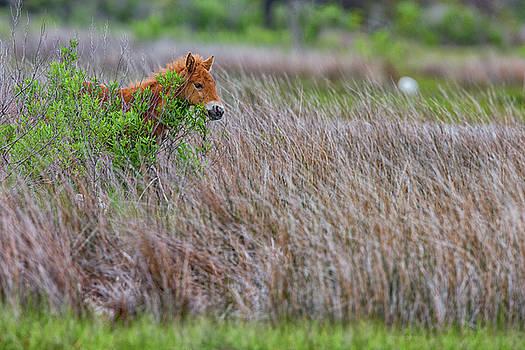 Baby Pony by Dennis Clark