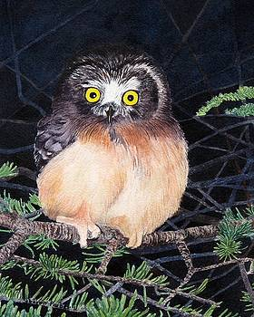 Baby Saw Whet Owl by Sharon Farber