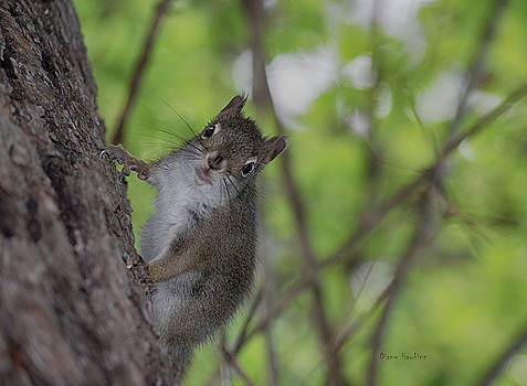 Baby squirrel by Diane Hawkins