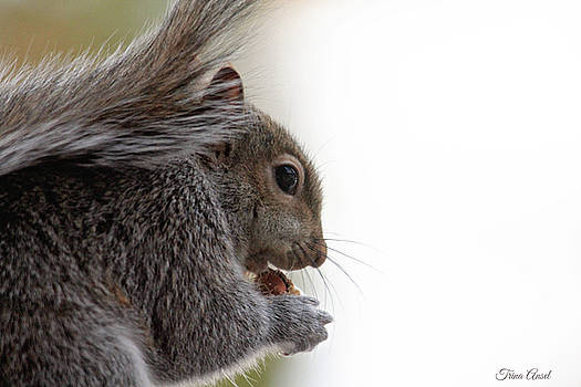 Baby Squirrel Portrait by Trina Ansel