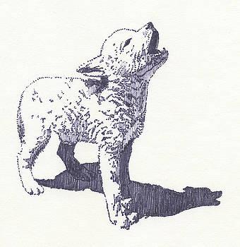 Baby Wolf by John D Benson