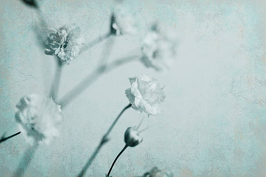 Baby's Breath in Blue by Bernice Williams