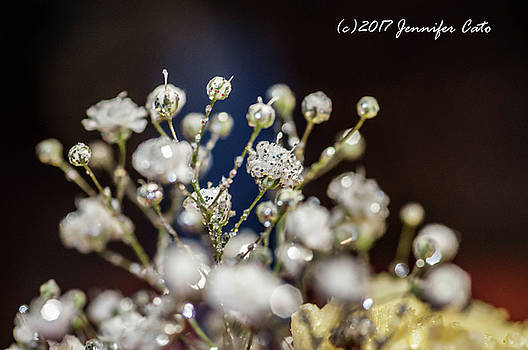 Babysbreath by Jennifer Cato