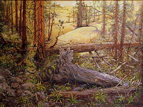 Back Country by Jackie Langford