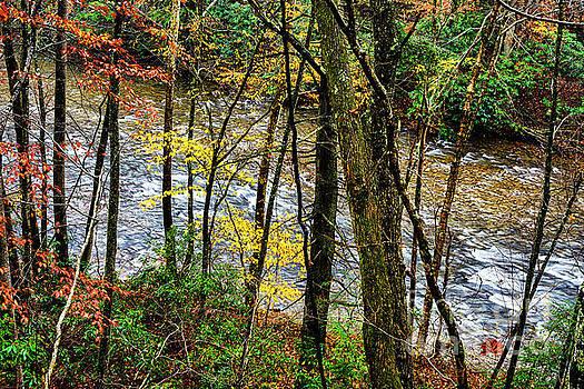 Back Fork of Elk River Autumn by Thomas R Fletcher